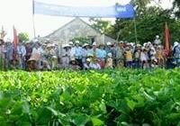 Festivals in Khanh Hoa Province
